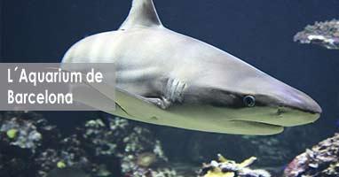Activiades con Tiburones. Acuario de Barcelona