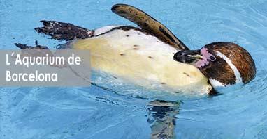 Feeding Times, ven a ver la alimentación de los animales marinos. Acuario de Barcelona