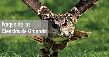 Rapaces en vuelo. Parque de las ciencias de Granada